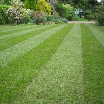 Professional Lawn Mowing Services in Dublin, Ohio