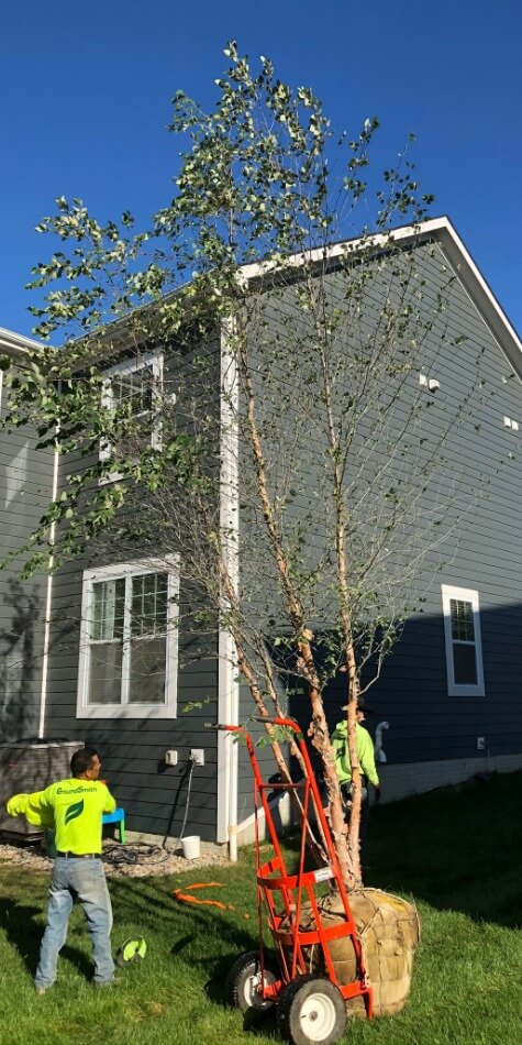 Tree Planting Services in Powell Ohio